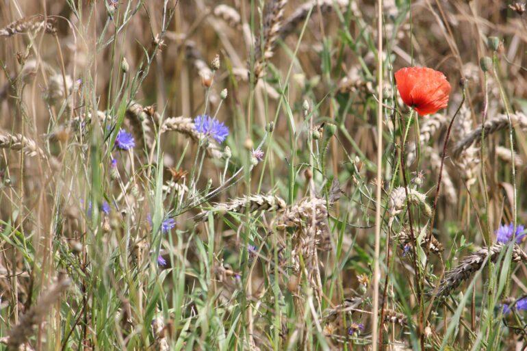 Blumen aus der Natur