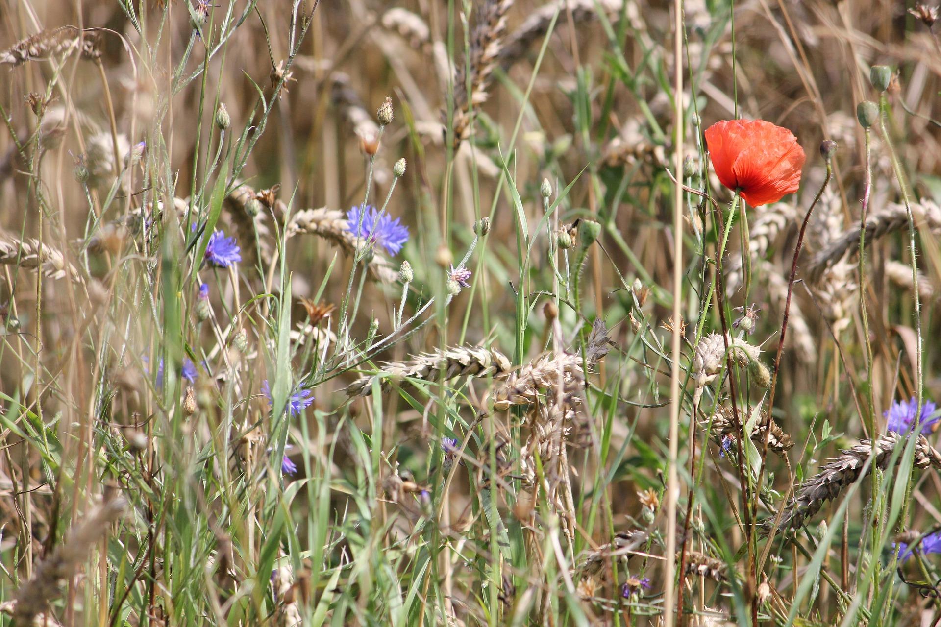 Tischdeko im Sommer mit Blumen