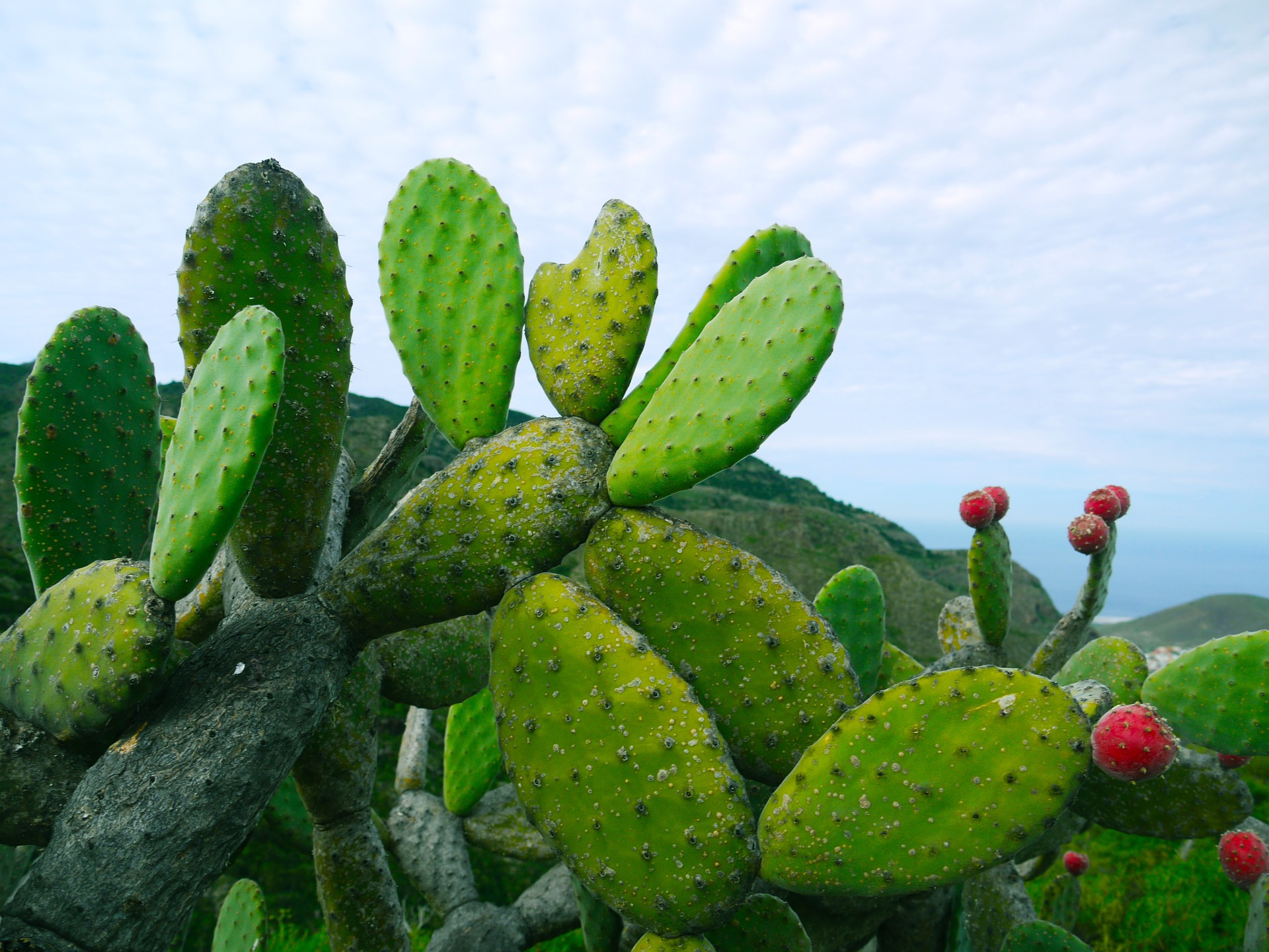 Kaktus, Sonne, Mexiko – Fiesta Mexicana als Kaktusparty